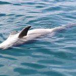 Ritrovato delfino morto sulla spiaggia di Latina