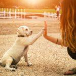 Oggi si celebra la giornata mondiale del cane