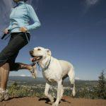 Passeggiata con il cane e consumo di calorie