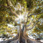 I bambini sono come gli alberi, vanno curati affinchè essi possano crescere.